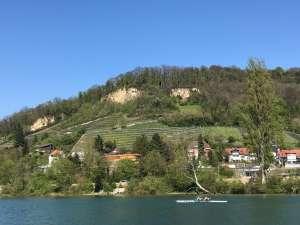Rheinfelden Weinberge auf deutscher Seite